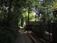 スナップ  シダ - エンジェルの画日記・音楽の散歩道