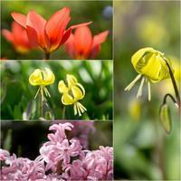 庭の花たち - つれづれ **2