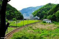 新緑の川根路  - 長い木の橋