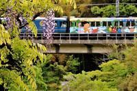 藤の花とゆめ列車 - 今日も丹後鉄道