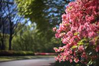素敵な色で - Today's one photograph
