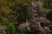 桜景 - akiy's  photo