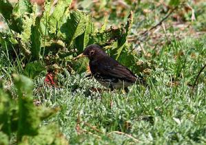 囀りが素晴らしい黒白の小鳥 - JUNJUNのブログへようこそ!