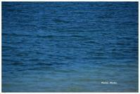 海と愛犬、アオスジアゲハ。 - Season of petal
