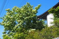 ナンジャモンジャの木とグッスリのフー - ねこ飛び出し注意