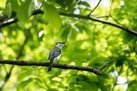 偶然の出合い - 趣味の野鳥撮影