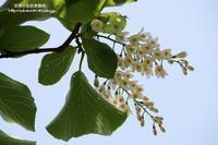 皇居東御苑の初夏の木々の花!!! - 自然のキャンバス