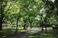 なんじゃもんじゃ 静岡 城北公園 - 笑顔が一番