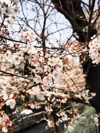 #234 日本の春 Japanese spring - THIS MOMENT