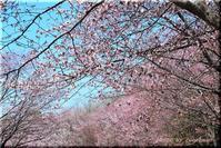 世の中は、、(森林総合研究所 北海道支所) - 北海道photo一撮り旅