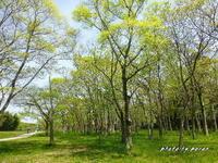公園の新緑風景です。 - デジカメ散歩悠々