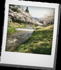 観音寺の桜 - khh style