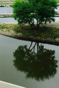 気になる木 - 「美は観る者の眼の中にある」
