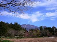 今年もまた・・・^^ - 浅間山眺めてほのぼのlife~花だより♪