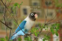 B.Bバカンス♪・Ⅱ - FUNKY'S BLUE SKY