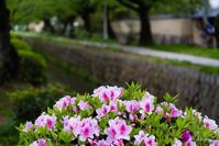 京都の新緑 2017 〜哲学の道〜 - ◆Akira's Candid Photography