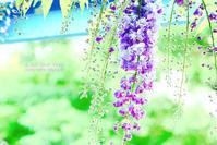 murasaki no yume - IL EST TROP TARD     時は過ぎゆく ...