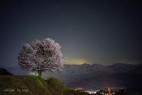 桜の時間 - o'night