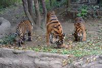3ショット - 動物園へ行こう