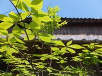 緑が生き生き - アオモジノキモチ