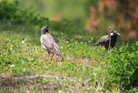 今日の鳥さん 170502 - 万願寺通信
