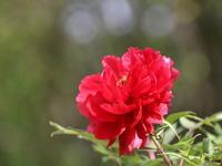 赤い花咲く・・・ ふふ、超要注意編 - 自然がいっぱい3