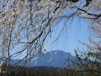 桜と浅間山 - 春の軽井沢