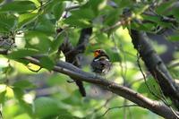 コサメビタキが多い時期 - 野鳥写真日記 自分用アーカイブズ