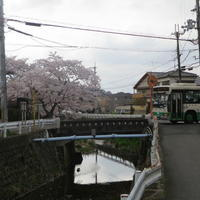 秋篠川の桜並木をあるきつつ源流を探したりなんかしたりする話をダラダラやっております。 - 新世界遺産への道~他とは違うちょっとした苦味~