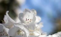 花を探しに植物園へ Vol.01 - フユビヨリ
