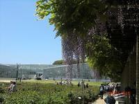 2017 初夏の深大寺と神代植物公園へ ♪ - 良かった~探しの人生