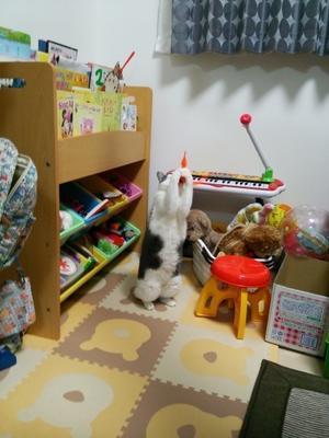【里親決定の猫】グレコとふうちゃん(鈴とら) - 猫と一緒に。