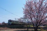 小樽桜めぐり2017#2  - ainosatoブログ02