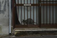 日奈久の猫 - Mark.M.Watanabeの熊本撮影紀行