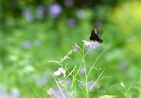 里山散策で出会ったチョウ - 旅のかほり