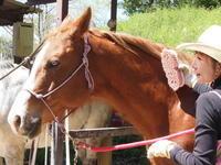 馬教室 報告&お知らせ - pieni.. ecole +cafe ピエニ 小さな学校とカフェ
