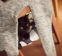隠れてるんです - 小 ハル 日和