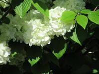 白花 - 日々の宝物