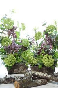 リラのパラレルなコンポジション - お花に囲まれて