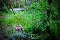 ロビンソンの庭化 - 世話要らずの庭