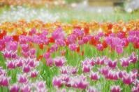 ガーデンネックレス横浜 花風景 - 素顔のままで