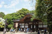 なんじゃもんじゃの木 - CHIROのお庭しごと