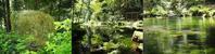 御手洗池から赤蔵山 - 神野正博のよもやま話