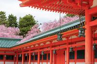 京のさくら2017 4月12日桜めぐり - ぴんぼけふぉとぶろぐ2