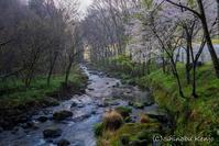 桜旅〜渓流の桜。 - 撃沈 Photo Diary