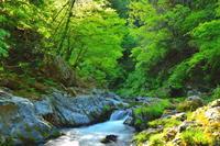 眩い緑の渓流 4 - 天野主税写遊館
