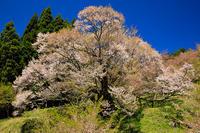 奈良の桜2017 仏隆寺の春 - 花景色-K.W.C. PhotoBlog