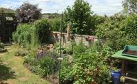 生きものに優しいガーデニング ‐4. ワイルドライフガーデナーDaveさんの庭 - ブルーベルの森-ブログ-英国カントリーサイドのライフスタイルをつたえる