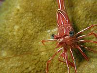 2010.09 奄美 The 2nd day The 1st Dive - ランゲルハンス島の海