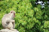 猿山にも新緑の季節 - 動物園のど!